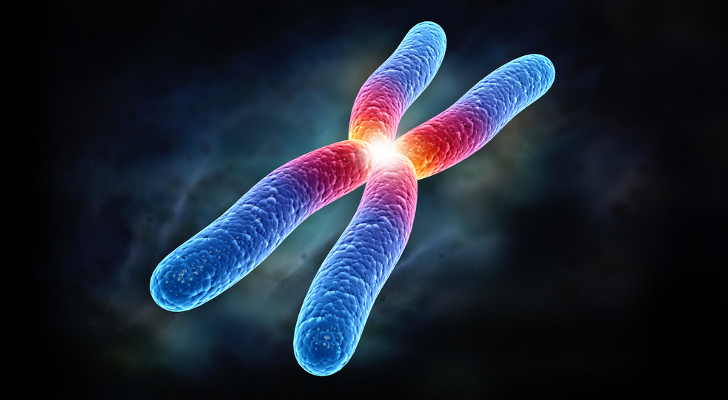 https://www.gogetnews.info/uploads/posts/2013-09/1380443765_chromosome.jpg