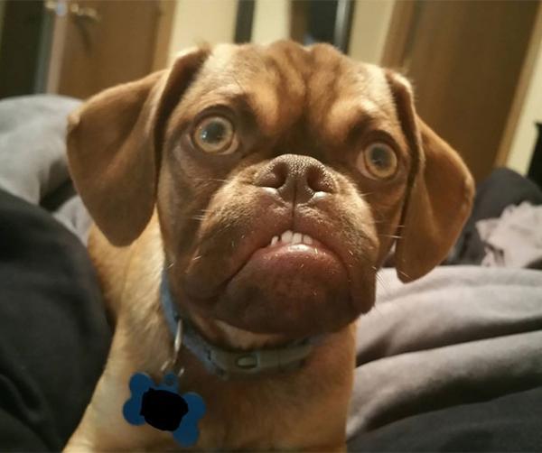 Суровый пес по кличке Эрл стал новой интернет-сенсацией (ФОТО)