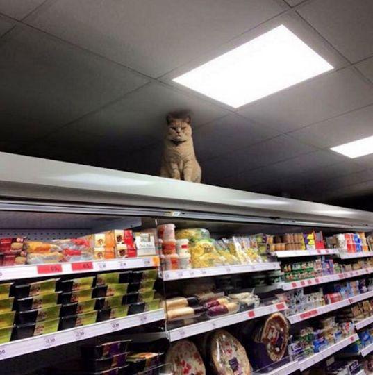 Суровый британский кот стал звездой Интернета (ФОТО)