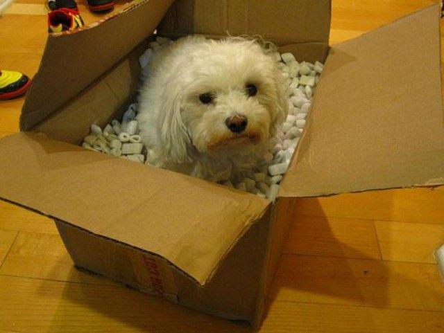 20 собак, которые думают, что они кошки (ФОТО)