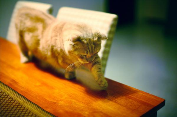 В мире животных: любителям котов посвящается (ФОТО)