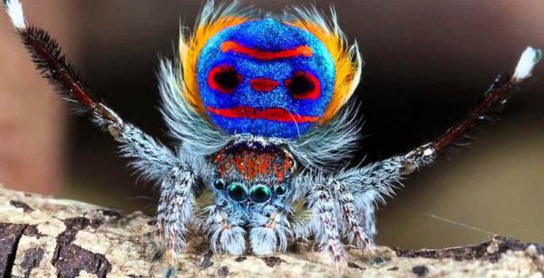 Десять видов существ, о существовании которых вы наверняка ничего не слышали (ФОТО)