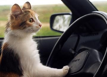 Nissan будет бороться за жизни котов