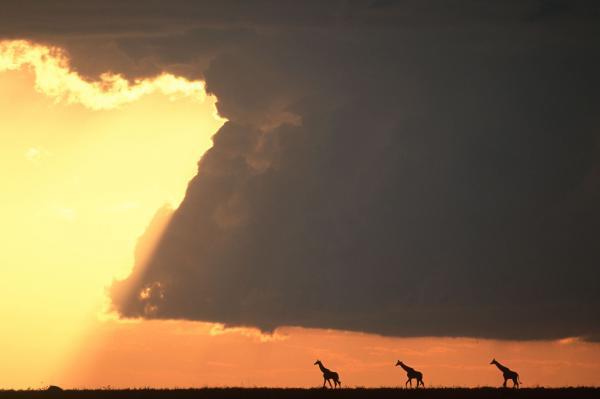 """Африканская красота. Как выглядит заповедник """"Масаи-Мара"""" (ФОТО)"""