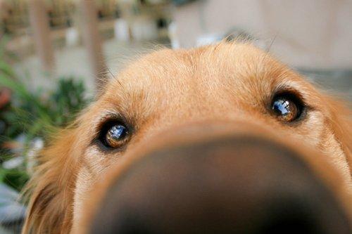 Любопытные носы пролезут везде. Собаки, которым интересно, чем вы заняты (ФОТО)