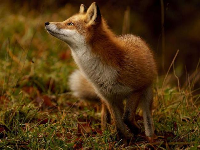Лучшие снимки дикой природы по версии National Geographic (ФОТО)