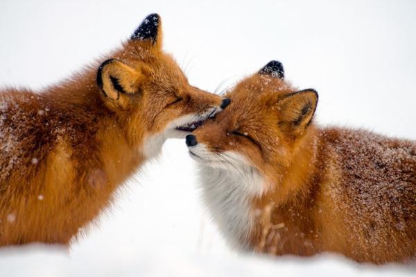 10 животных, у которых можно поучиться любви и верности (ФОТО)