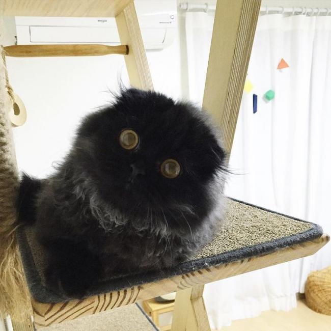 Гимо – кот с огромными гипнотическими глазами (ФОТО)
