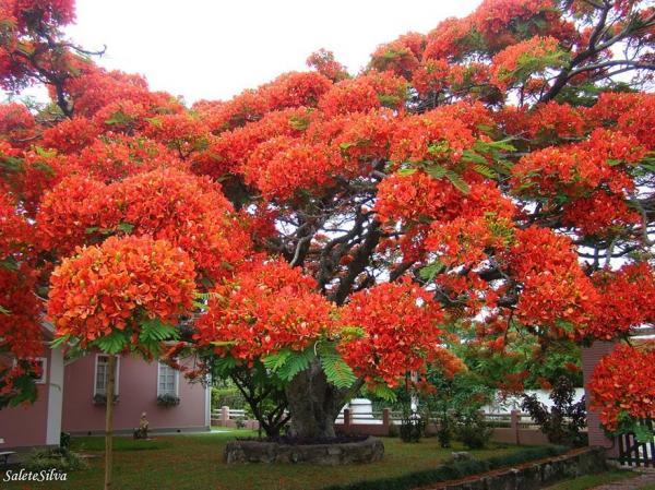 Чудеса природы: самые красивые деревья мира (ФОТО)