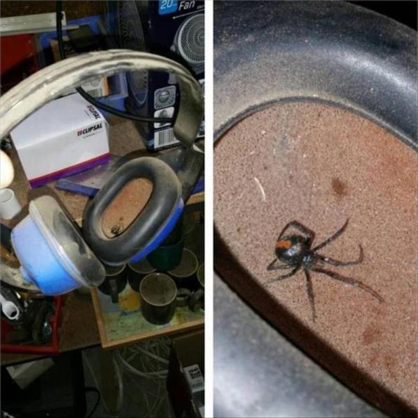20 снимков, от которых по коже бегут мурашки (ФОТО)