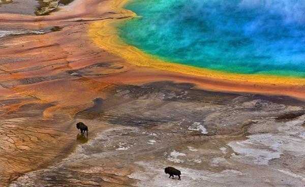 Британские биологи выбрали лучшие снимки природы 2016 года (ФОТО)