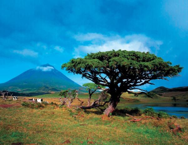 Страна чудес и сказок: неувядающая красота Португалии (ФОТО)