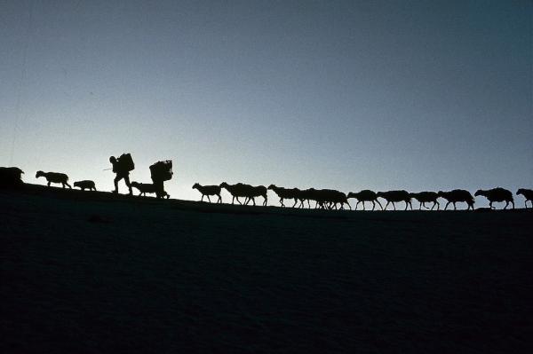 Связь с природой. Необычные работы талантливого фотографа (ФОТО)