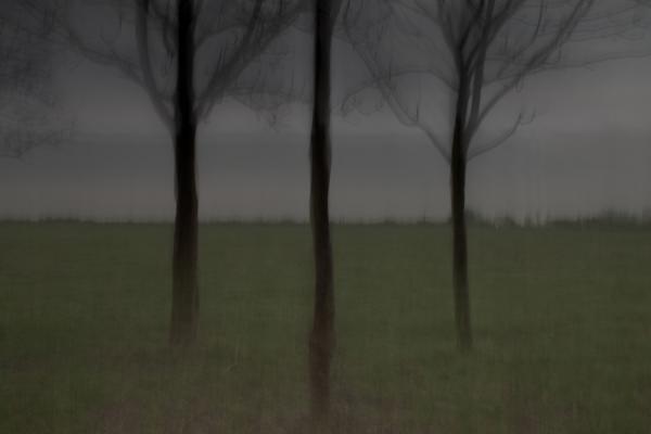 Пейзажная лирика художника, который не различает цвета (ФОТО)