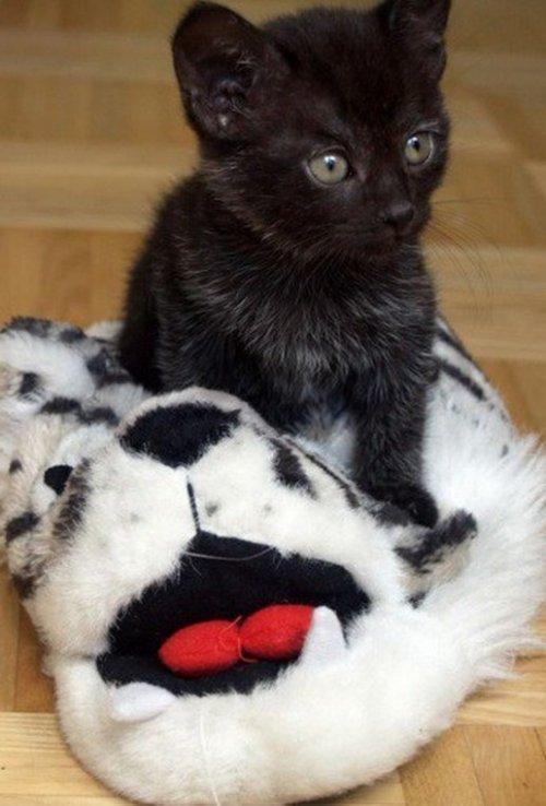 Кошки в домашних тапочках (ФОТО)