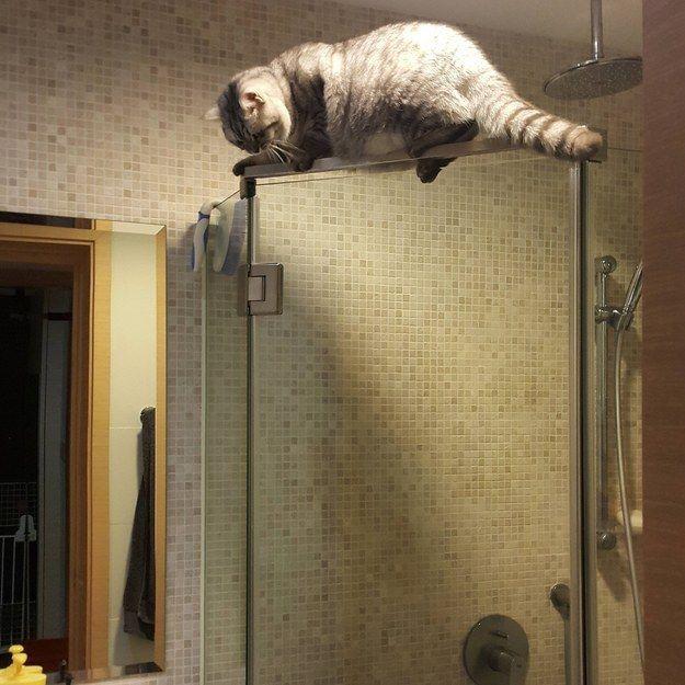 20 вещей, которые поймут только те, у кого есть кот (ФОТО)
