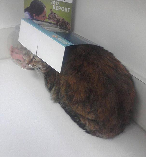 25 смешных котов, которые только что осознали, что находятся у ветеринара (ФОТО)