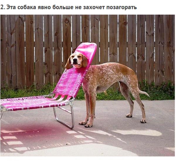 Животные, попавшие в трудную ситуацию (ФОТО)