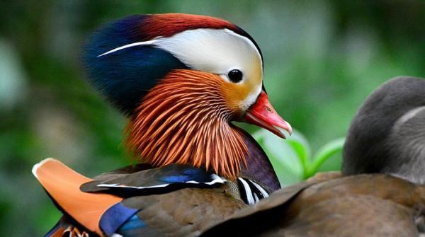 Буйство красок: самые яркие животные планеты (ФОТО)