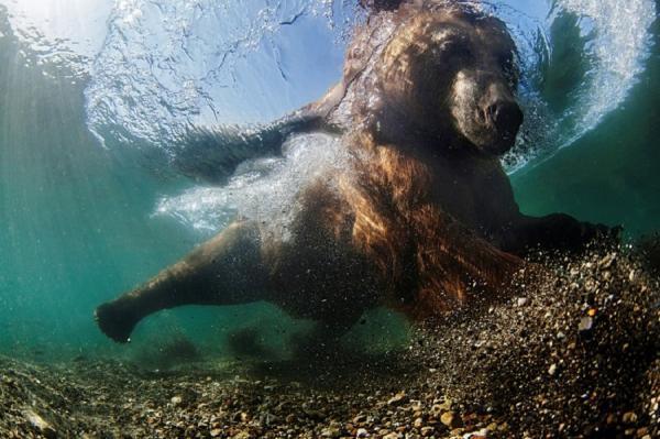 Жизнь в океане. Лучшие подводные снимки 2016 года (ФОТО)