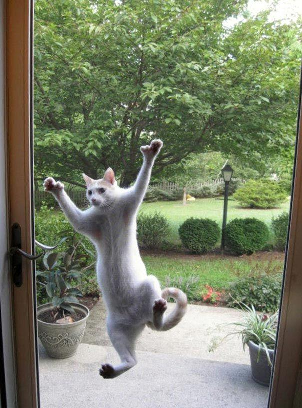 25 домашних животных, которые должны попасть внутрь прямо сейчас (ФОТО)