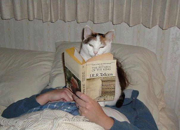 20 котов, которые плевали на ваше личное пространство (ФОТО)