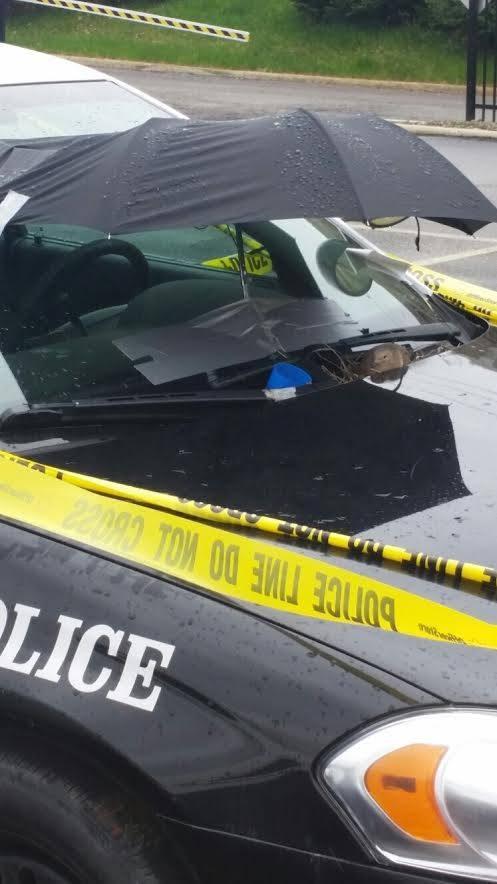 Голубка свила гнездо на капоте полицейской машины (ФОТО)