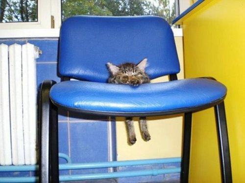 Домашние животные против мебели в доме (ФОТО)