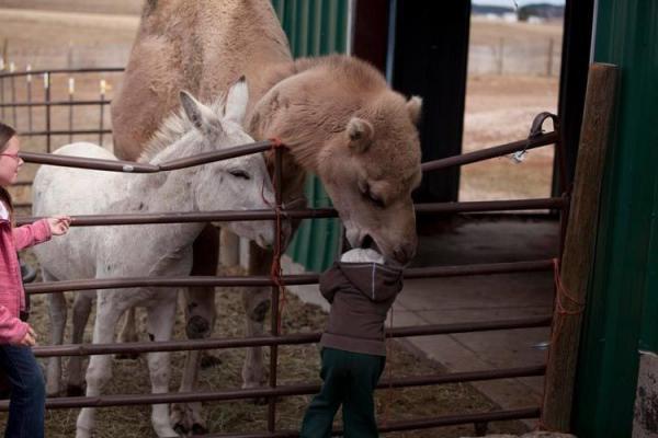 Забавные животные. Случаи в зоопарке (ФОТО)