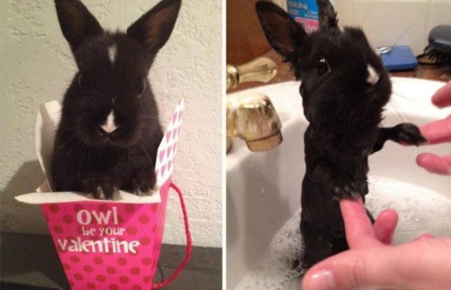 15 смешных животных до и после принятия ванной (ФОТО)
