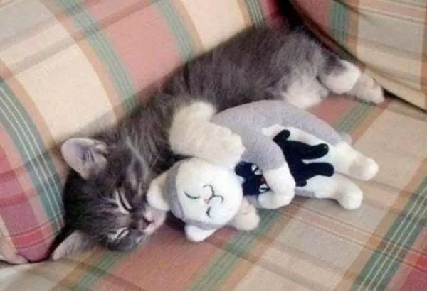 В мире животных:  эти забавные кошки (ФОТО)