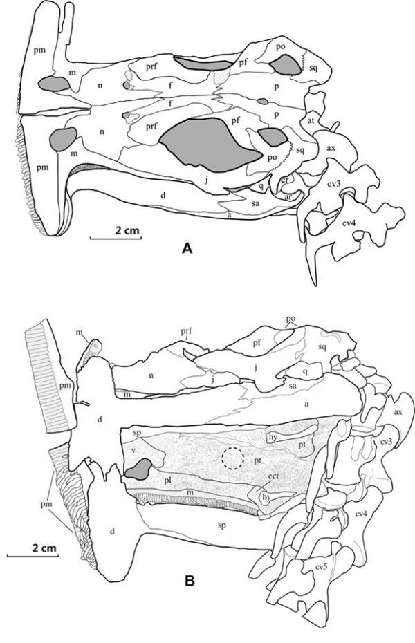 Международные археологи обнаружили останки древнего динозавра (ФОТО)