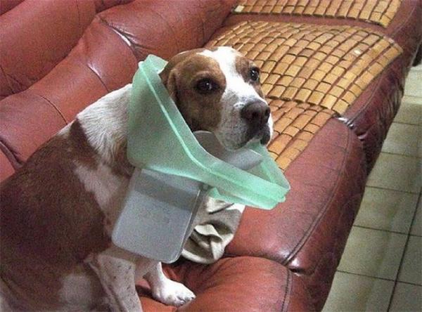 Домашние животные, которых застали в самый неподходящий момент (ФОТО)