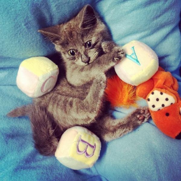 Самый удивленный кот в мире (ФОТО)