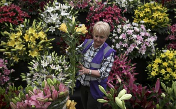 Рябь в глазах: в Лондоне открылась престижнейшая выставка цветов (ФОТО)