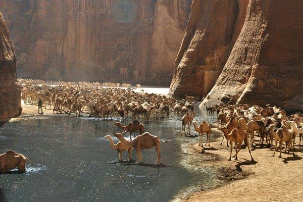 Чудо природы: удивительный оазис в пустыне Сахара (ФОТО)