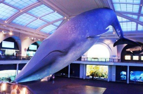 Гигантизм среди животных. ТОП-10 невероятных гигантов (ФОТО)