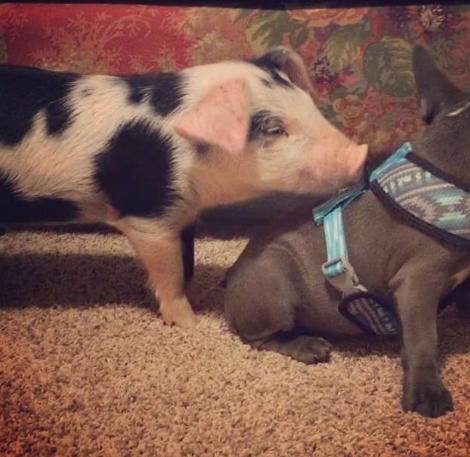 В мире животных. Необычная пара друзей (ФОТО)