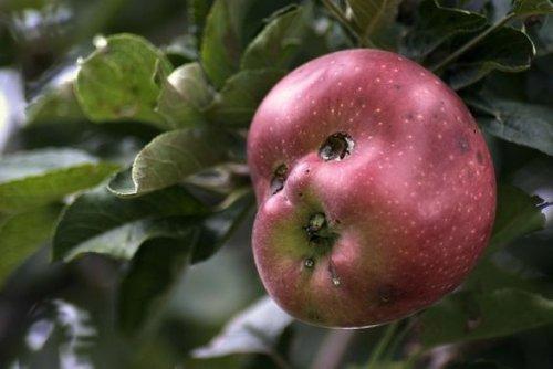 самые необычные фрукты и овощи мира фото