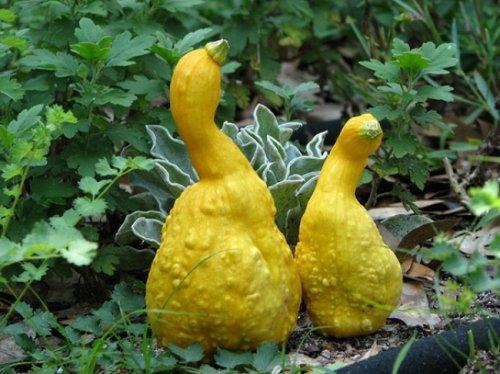 Самые необычные фрукты и овощи мира (ФОТО)