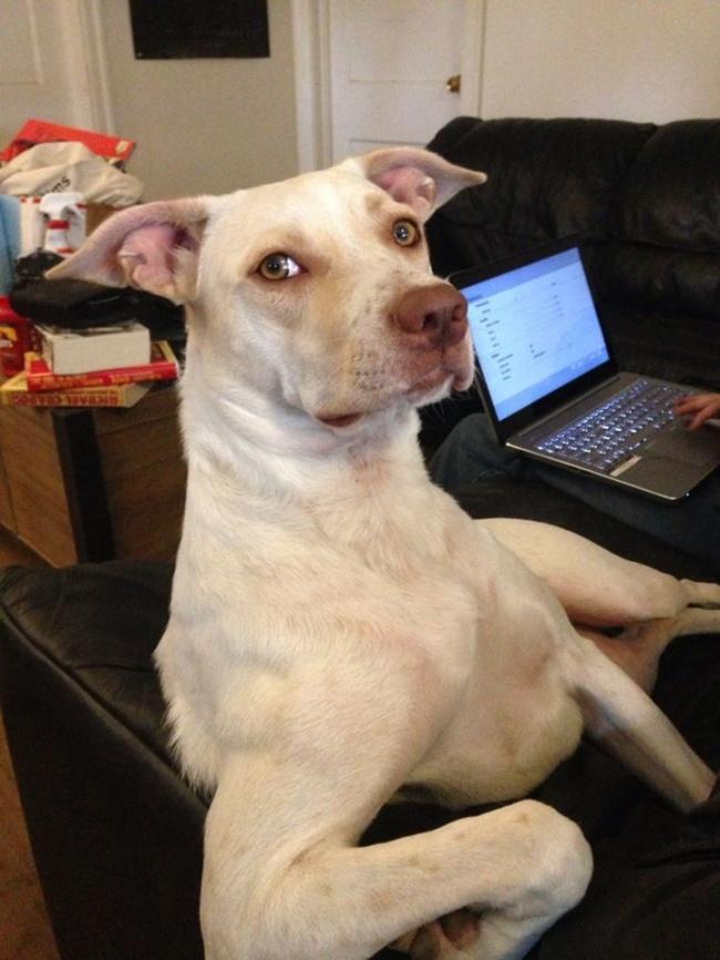 15 собак, которые уверены в том, что они люди (ФОТО)