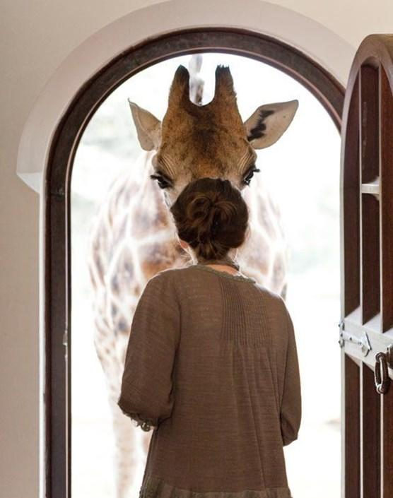 Giraffe Manor: самый необычный отель Африки (ФОТО)