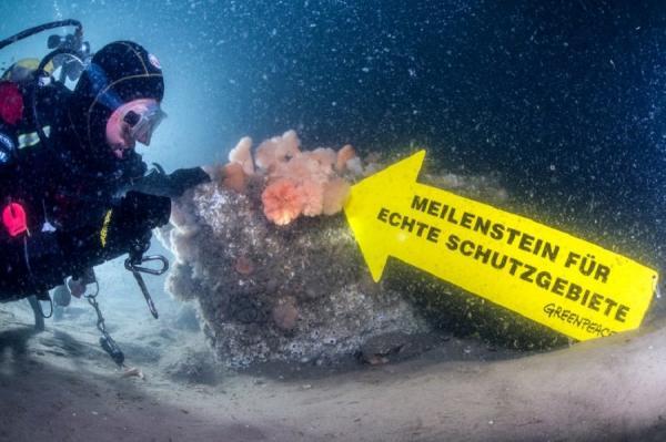 Уникальный подводный мир у побережья острова Зюльт (ФОТО)