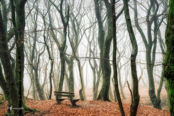 Красочные лесные пейзажи мастера фотографии из Нидерландов (ФОТО)