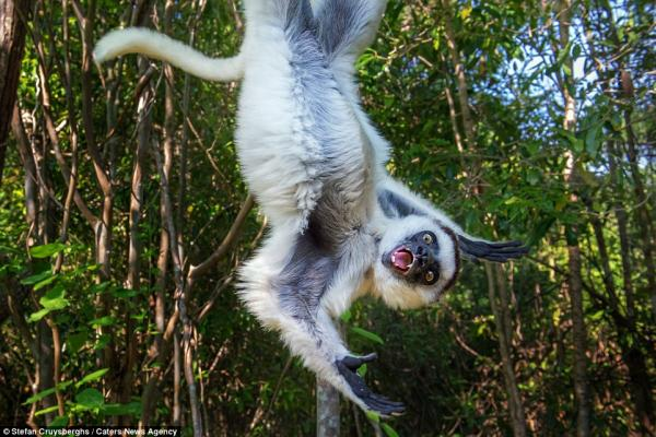Не ждали? Забавные животные, случайно попавшие в кадр (ФОТО)