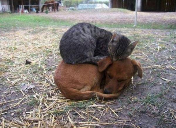 В мире животных. ТОП-10 лучших фотографий обнимашек (ФОТО)