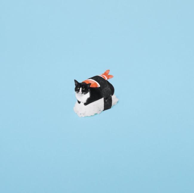 Знакомьтесь, это кошка Чито, и она обожает «взрывать» мозг пользователям Instagram (ФОТО)