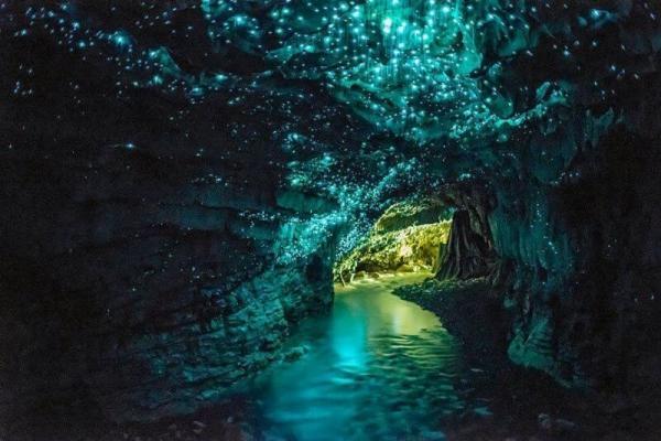 Небо в алмазах. Невероятные обитатели пещер Новой Зеландии (ФОТО)