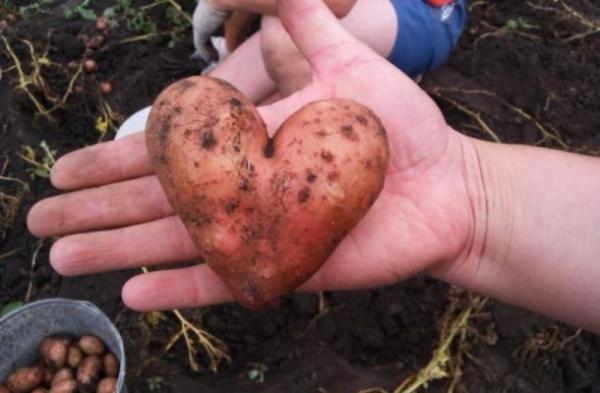 12 примеров того, что природа передает нам привет (ФОТО)