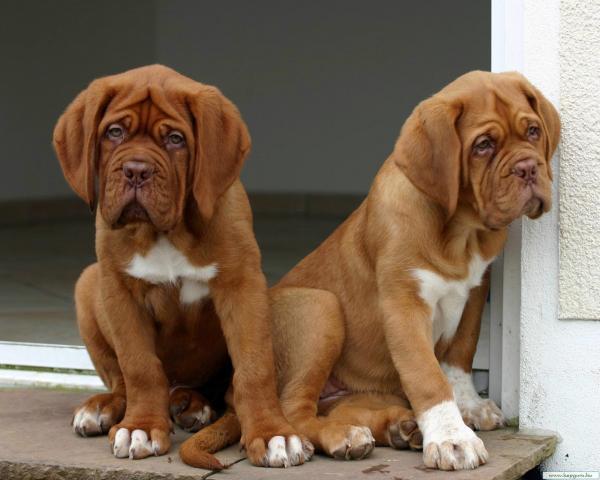 Как две капли. Подборка чудных близнецов среди животных (ФОТО)